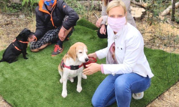Mehr Hundezonen für die Donaustadt